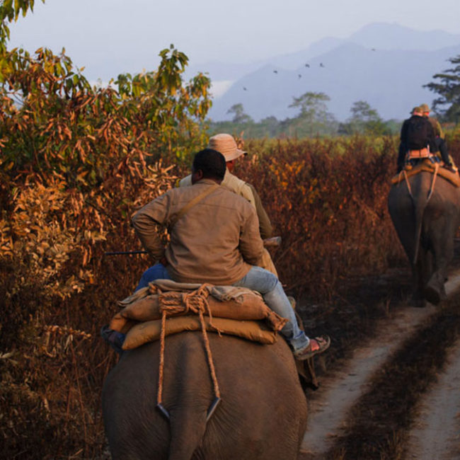 manas national park tour package