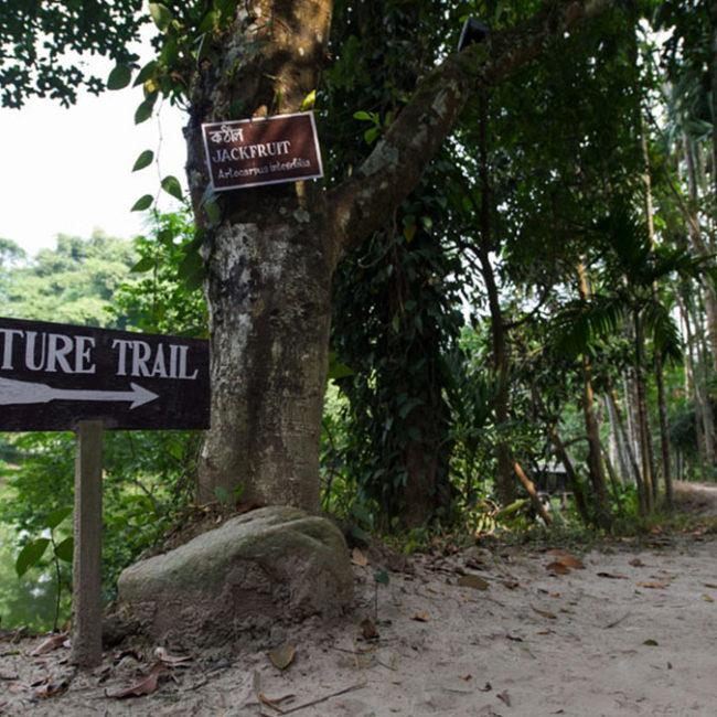 nature walk trails assam tour package